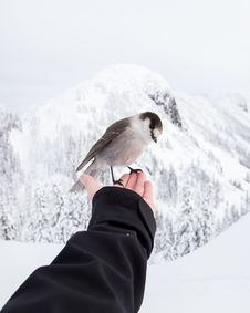 Free Sparrow On Hand In Winter Stock Photos - 82959253