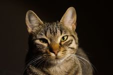 Free Cat In Sun Royalty Free Stock Photography - 82959277