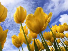 Free Yellow Flowers Under Blue And White Sunny Cloudy Sky Stock Photos - 82959623