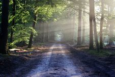 Free Road Receding Through Forest Stock Images - 82960664