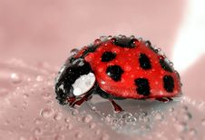 Free Close Up Photo Of Lady Bug Royalty Free Stock Photography - 82960877