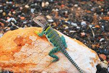 Free Grey Brown Green Lizard On Stone Stock Photo - 82961160