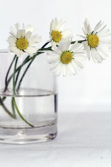 Free White Daisies In Glass Vase Royalty Free Stock Photos - 82961568