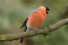 Free Bird On Branch Royalty Free Stock Photo - 82961885