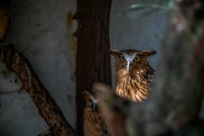 Free Owls In Shade Royalty Free Stock Image - 82961946