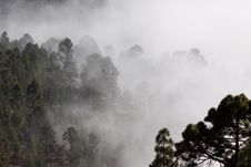 Free Misty Forest  Royalty Free Stock Photography - 82962227