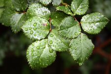 Free Close Up Of Droplets On Leaf Stock Photos - 82962233