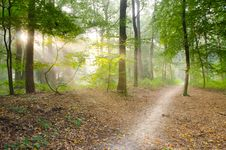 Free Gray Pathway Surrounded By Green Tress Royalty Free Stock Photo - 82962265