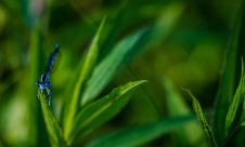 Free Blue Dragonfly On Green Leaf In Selective Focus Photography Stock Photo - 82962270