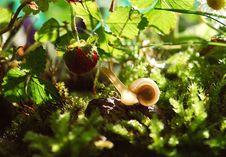 Free White Snail Near Red Fruit Royalty Free Stock Photos - 82962348