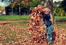 Free Boy Playing With Fall Leaves Outdoors Royalty Free Stock Image - 82962516