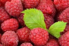 Free Red Raspberries With Green Leaves Royalty Free Stock Images - 82962629