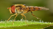 Free Brown Flying Insect Macro Photography Royalty Free Stock Image - 82962676