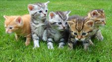Free Kittens In Grass Stock Images - 82962994