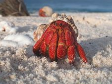 Free Hermit Crab In Shell On Beach Royalty Free Stock Image - 82963186