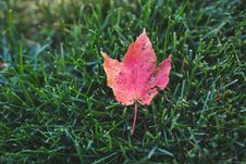 Free Red Autumn Leaf Stock Photo - 82963380