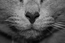 Free Close Up Of Cat Nose And Whiskers Stock Photos - 82964263