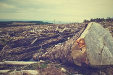Free Fallen Tree In Cleared Countryside Field Stock Photo - 82964330