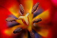 Free Black Yellow And Red Flower Stigma In Tilt Shift Lens Stock Photo - 82964350