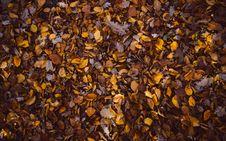 Free Brown Leaf Pile Royalty Free Stock Image - 82964426