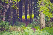 Free Path Through Green Forest Royalty Free Stock Photo - 82964475
