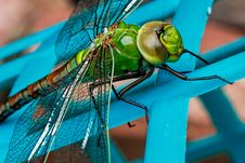 Free Green Dragonfly Stock Image - 82964611