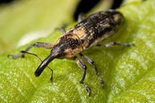 Free Yellow And Black Insect On Green Leaf Royalty Free Stock Image - 82964616