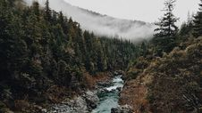 Free Stream Running Through Forest Royalty Free Stock Photos - 82964658