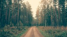 Free Brown Dirt Road Between Green Leaved Trees During Daytime Royalty Free Stock Images - 82964789