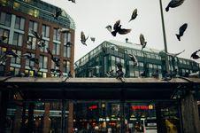 Free Birds In Urban Skies Royalty Free Stock Image - 82964826