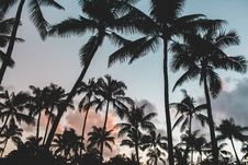 Free Palm Trees Against Setting Sun Stock Images - 82964974