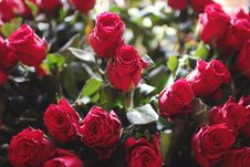 Free Bouquet Of Red Roses Royalty Free Stock Images - 82965269