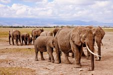 Free Group Of Elephants On Walking On Brown Road During Daytime Royalty Free Stock Images - 82965679