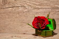 Free Red And Green Rose Inside Green And Brown Chest Box Royalty Free Stock Photography - 82965697