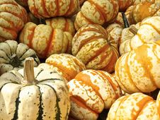 Free Colorful Pumpkins Royalty Free Stock Images - 82965979
