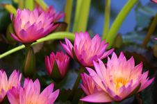 Free Purple Flower Plants After Dark Stock Photo - 82965990