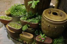 Free Pots And Plants Stock Photos - 82972523