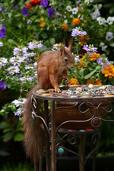 Free Brown Squirrel In Black Metal Round Table During Daytime Royalty Free Stock Image - 82973576