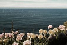 Free Ocean With Pink Flowers Nearby The Camera On A Sunny Day Stock Photo - 82974130