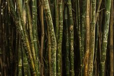 Free Green And Brown Bamboo Trees Royalty Free Stock Photos - 82974158
