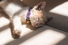 Free Orange Cat Sleeping On The Grey Surface Royalty Free Stock Photo - 82975315