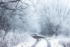 Free Pathway Surround Forest Covered In Snow Stock Image - 82977281