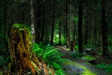 Free Green Fern Beside Brown Wood Log Beside Gray Path During Daytime Inside Forest Stock Image - 82977331