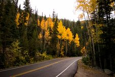 Free Forest And Concrete Road Royalty Free Stock Images - 82977539