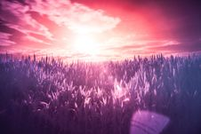 Free Sunset Over Grasses Stock Photo - 82977610
