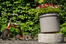 Free Tricycle In Garden Stock Images - 82977964