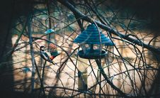 Free Bird And Feeder In Trees Royalty Free Stock Images - 82978349
