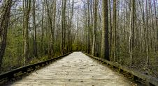 Free Brown Wooden Bridge Between Lifeless Tree Under Clear Blue Sky During Day Time Royalty Free Stock Images - 82978429