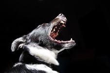 Free Barking Dog Stock Photography - 82978962