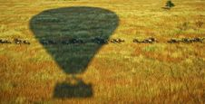 Free Shadow Of Hot Air Balloon On Animal Herd Running Across Green Plains Royalty Free Stock Photo - 82979365